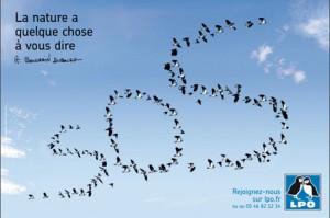 La-ligue-pour-la-Protection-des-oiseaux