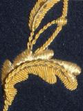 begonia02