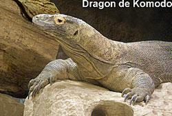 Didier Néraudeau pour sa mise au jour des Carentonosaures de l'île Madame