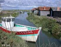 Patricia et Jean-Yves Piel pour leur site Internet sur les marais de la Seudre : http://perso.wanadoo.fr/ym.piel