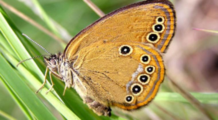 Benoit Perret pour son ouvrage sur les papillons de Haute Saintonge