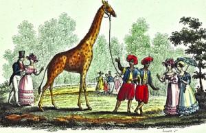 visite-la-giraffe