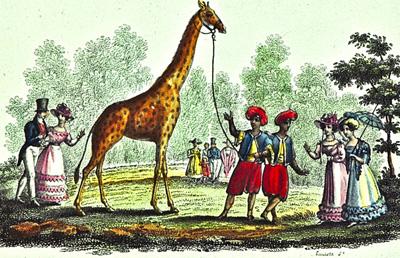 Olivier Lebleu pour «Les avatars de Zarafa, la première girafe de France»