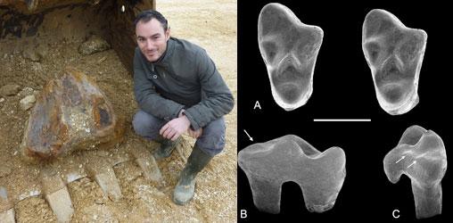 Romain Vullo pour la découverte du plus vieux marsupial d'Europe à Archingeay