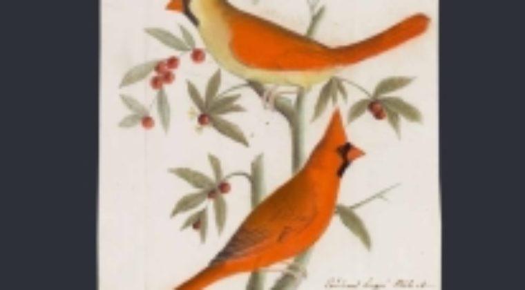 Lucille Bourroux, pour son ouvrage « Jean-Jacques Audubon, dessins de jeunesse »
